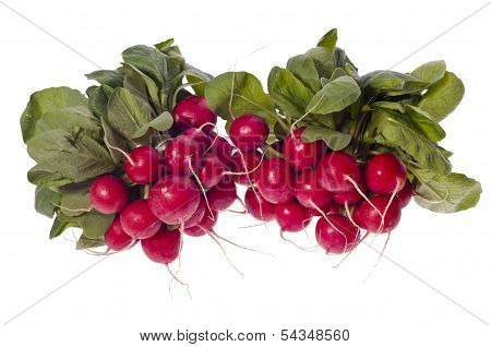 Two Bunches Of Radishes