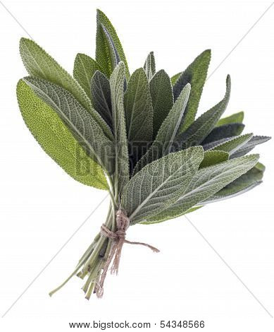 Bunch Of Sage Fresh Leaves