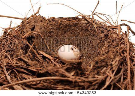 Bird Nest Egg cracked On White Background