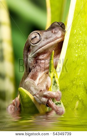 Small Frog On A Plant
