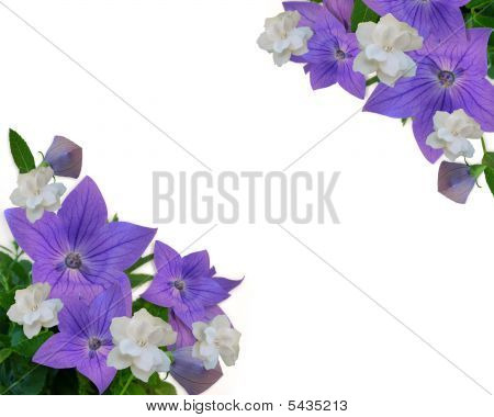 Floral Border Blue Balloon Flowers