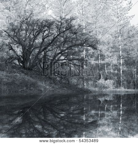 old tree in forest reflection in lake