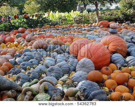 Pumpkin Patch - Dallas Arboretum