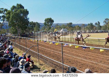 Camel Race.