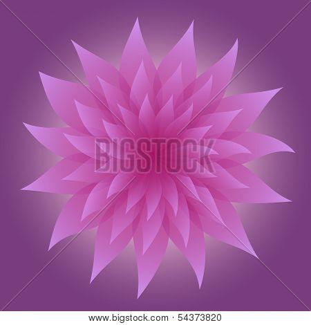 Lilac Flower On Violet Background