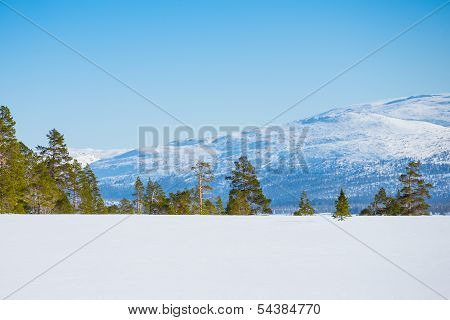 Scenery With Untouched Snow, Pines, Firs And A Mountain
