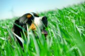 image of cute dog  - A cute dog portrait in the grass - JPG