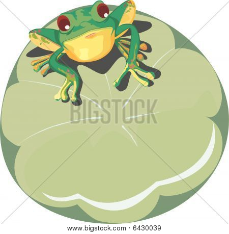 serious frog in a water hyacinth
