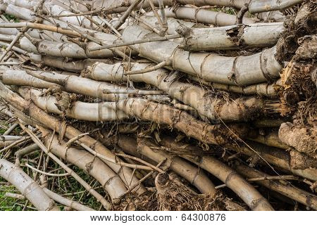 bamboo sticks in a heap