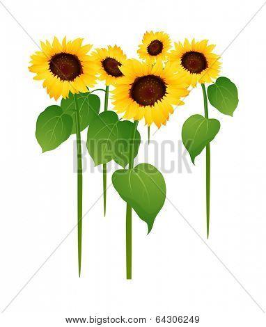 vector icon sunflower