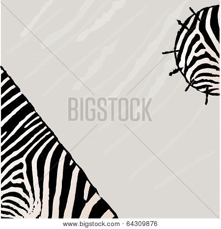 Abstract zebra vector background