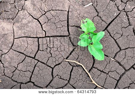 Young sprout on dry land