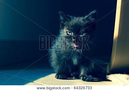little black cat