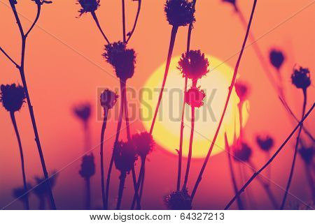 sunset landscape with sun over dry grass