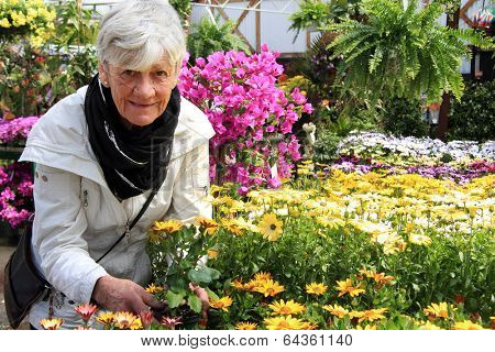 Senior woman shopping for annual flowers at a plant nursery.