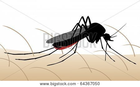 Illustration of a mosquito sucking blood from human skin