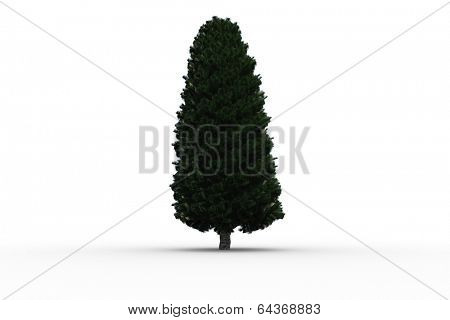 Tall tree with green foilage on white background