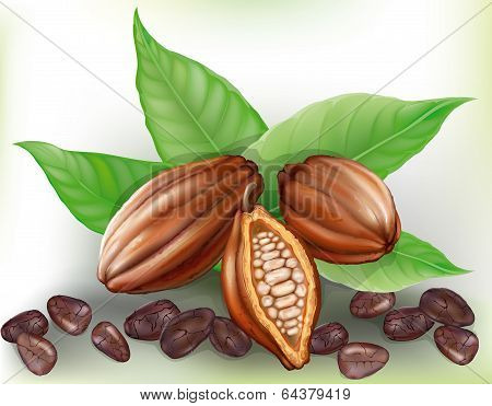 Cacao Fruit And Grains