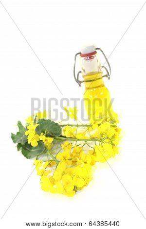 Yellow Rapeseed Oil