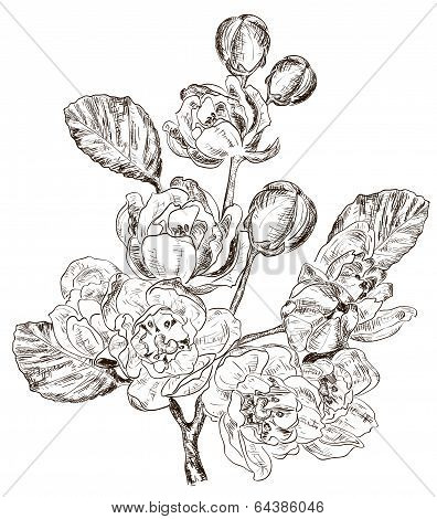 sketch of Branch of spring flower