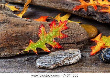 Autumn Oak Leaf On Aged Driftwood