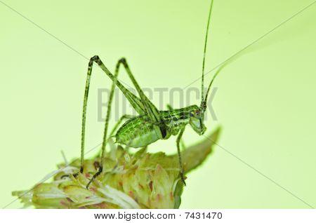 tiny green katydid in the urban parks