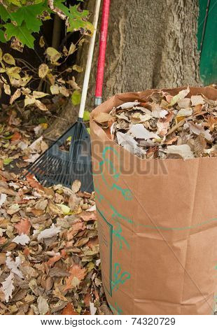 Bagging Fall Leaves