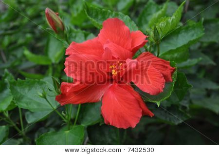 Big Red Flower