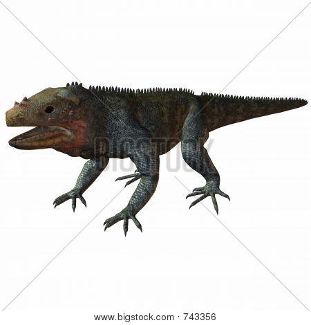 Iguana Andros Island
