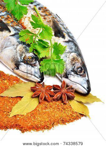 Fresh Mackerel Fish With Parsleyand Spices