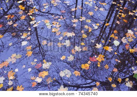 colorful falling autumn leaves on water with tree and sky reflection
