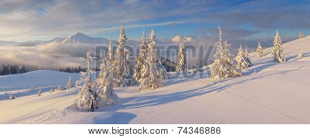 Christmas landscape. Winter panorama with snow covered fir trees. Sunny morning in the mountains. Carpathians, Ukraine, Europe