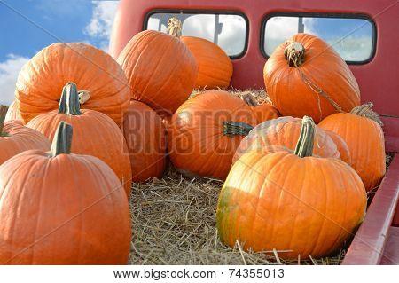 Pumpkins on back of vintage pickup truck