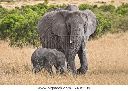 Large Elephant With Baby