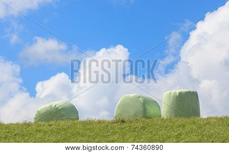 The Wrapped Round Hay Bales (silage) With Clear Blue Sky Background.
