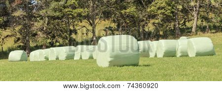 The Row Of Wrapped Silage On Green Farm In Harvest Season.
