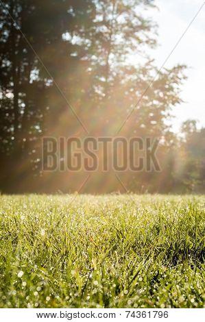 Fresh Look Grassy Field With Sun Rays