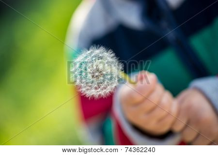 Child Holding A Dandelion Clock