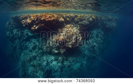 Underwater shot of the coral reef wall in Ras Muhammad National Park, Egypt