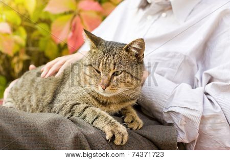Cat In Lap