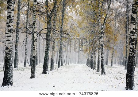 Snowstorm In Autumn Park