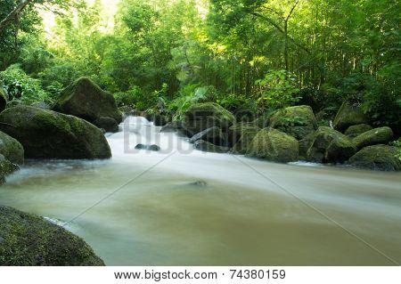 Rushing Stream in Green Jungle