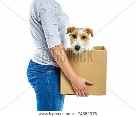 Woman holding dog in box isolated