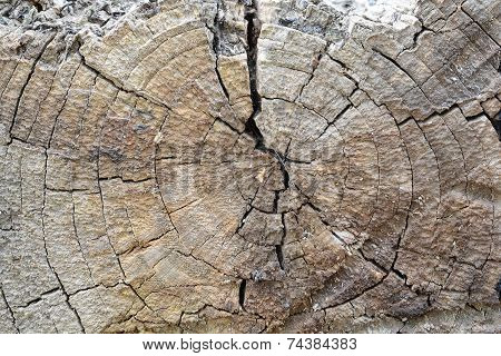 Structure Of The Saw Cut Logs In The Background