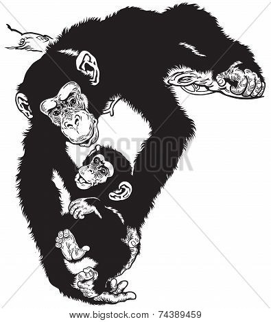 chimpanzee with baby black white