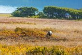 picture of grizzly bear  - Grizzli  bear in autumn season - JPG