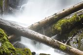 image of priceless  - close up of national creek falls in oregon with slow flowing water over the rocks and logs - JPG