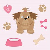 picture of dog breed shih-tzu  - Little glamour tan Shih Tzu and dog stuff - JPG
