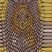 picture of python  - Snake python skin texture - JPG