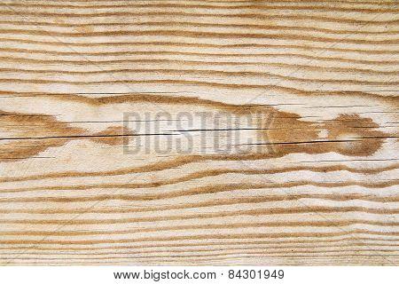 Pine Tree Texture